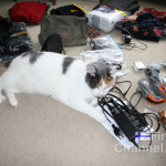 Our cat Lucky inspects the contents of my luggage