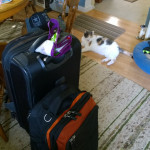 Bags are packed, inspected by Lucky